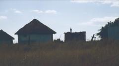 South Africa 2006 (patrikmloeff) Tags: southernafrica afrika africa afrique african afrikanisch erde earth terre monde welt world ferien urlaub vacances holiday holidays beautiful analog analogue minolta sommer summer eté travel traveling reise reisen voyage outdoor adventure südafrika southafrica suidafrika zuidafrika afriquedesud südlichesafrika 2006 wildcoast wild coast trail trekking hiking natur nature landschaft landscape dorf hut village hütte kind kid silhoutte schatten horizont people mensch gens amadiba