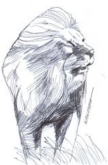 leon a lapicero (ivanutrera) Tags: leon lion draw dibujo drawing dibujoalapicero boligrafo animal wild wildlife sketch sketching lapicero pen dibujoaboligrafo
