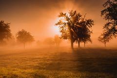 Auf der Wiese (Sascha Wolf) Tags: sonnenaufgang nebel fog orange stimmungsvoll wiese oktober
