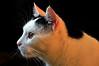 Kater Larry (Hobbyfotografie Rebekka) Tags: katzen katze tier tiere natur fotografie tierfotografie
