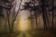 Disguised reality... (jaegemt1) Tags: mariajaegerphotography mist magical morning path peace parkway peaceful blueridgeparkway trees tree tranquil landscape light leaves virginia jaegemt1 fog forest foggy