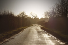 Road To Nowhere [2/365 2017] (steven.kemp) Tags: northtuddenham hockering golden hour road tree countryside england norfolk elsing