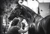 Devon 2016 (Jen MacNeill) Tags: devonhorseshow2016 devon horse show equine equestrian pennsylvania pa saddlebred gaited americansaddlebred
