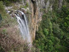 Purling Brook Falls P1020295 (benhosg) Tags: springbrooknationalpark waterfall
