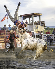 "Losing at ""Bull Hockey"" (crabsandbeer (Kevin Moore)) Tags: action americana animals battleofthebeast bullbullriding children cowboy horse kids people rodeo rural smalltown speed sports unionbridge violence balls nerve injury gored tossed airborne wow"