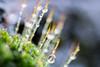 DSC_9422 (xav_roberts) Tags: macro closeup dew nikonv1 nikonft1 nikon sigma105mmf28mm water droplets morningdew rain raindrops