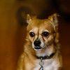 Joanszoo16Jan20170032.jpg (fredstrobel) Tags: dogs joansnewhome pets bella animals usa ga places canton