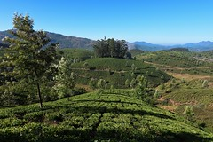 Munnar Tea estate (kailas bhopi) Tags: munnarhills munnar kerala landscape teafarming teaestate teagarden nikon7200 nikond7200withtokina1116 tokina1116 tourism tokina keralatourisum