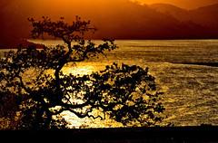 DUSK (Aspenbreeze) Tags: tree sunset sundown dusk twilight water reflection resovoir threeriverscalifornaia california nature rural outdoors bevzuerlein aspenbreeze moonandbackphotography