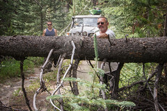 windfall (fantomdesigns) Tags: road camping camp tree 4x4 chainsaw off cutting land cruiser windfall chilcotin taseko