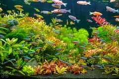 Fishes (jasonlcs2008) Tags: wild nature animal animals natural outdoor wildlife mothernature 2015 jasonlcs
