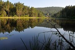Au miroir de leau (Excalibur67) Tags: nature forest landscape nikon contemporary sigma paysage reflexion reflets eaux d90 tangs vosgesdunord forts 1770f284dcoshsmc