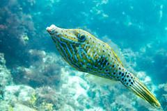 20150905-DSC_3018.jpg (d3_plus) Tags: sea sky fish beach japan scenery underwater diving snorkeling  shizuoka    apnea izu j4  waterproofcase    skindiving minamiizu       nikon1 hirizo  1030mm  nakagi 1  nikon1j4 1nikkorvr1030mmf3556pdzoom beachhirizo misakafishingport  1030mmpd nikonwpn3 wpn3