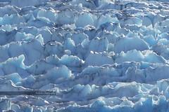 Glacier (Notkalvin) Tags: old cruise cold ice nature beauty alaska frozen amazing ancient natural outdoor cruising glacier compression fjord royalcaribbean tracyarmfjord mikekline michaelkline notkalvin notkalvinphotography