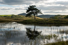 Kelly Hall tarn- mid afternoon (Malajusted1) Tags: sunset england lake tree reflections reeds hall district commons cumbria kelly tarn lakeland consign torver