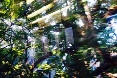 train in the jungle (KevinIrvineChi) Tags: abstract cta ctabrownline rail railroad train trains rapidrail l ravenswood light sunny sun chicago chicagoist gapersblock gbrearview outdoors outside outsider urban city cityofchicago reflection reflections reflective trees tree jungle blur blurry autumn autumnequinox equinox