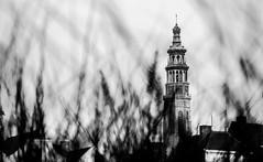 WWPW 2015 (martijn225) Tags: white black daylight zeeland photowalk gras middelburg walcheren langejan wwpw2015
