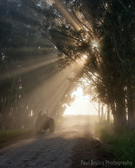 Misty Morning Light Rays (Panorama Paul) Tags: trees tractor southafrica rays westerncape overberg greyton nikkorlenses nikfilters nikond800 wwwpaulbruinscoza paulbruinsphotography