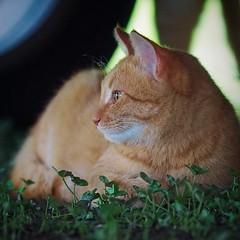 2015-10-25 17.06.50 (pang yu liu) Tags: travel animal cat 10 oct homestay 阿里山 旅遊 alishan 2015 民宿 十月 mimiyo 祕密遊