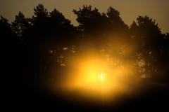 Sunrise through fog (nudelbach) Tags: morning trees light sky sun mist fog sunrise landscape licht woods nebel outdoor hell himmel landschaft sonne bume sonnenaufgang sonnenstrahlen sunbeams morgens strahlen drausen