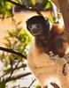 LEMUR-PARK-94 (RAFFI YOUREDJIAN PHOTOGRAPHY) Tags: park city travel trees plants baby white cute green animal fauna canon river jumping sweet turtle wildlife bricks mother adorable adventure explore lemur 5d lemurs bushes madagascar 70200 antananarivo mkiii