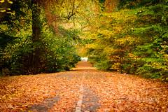 Culloden Avenue (@houdi_) Tags: scotland unitedkingdom gb evie inverness culloden gruffalo cullodenwoods