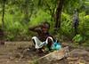 PA270379 (milktrader) Tags: tribes benin woodabe