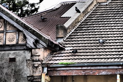 Roof (Mariasme) Tags: roof pigeons sydney dramatic terracehouse brightonlesands seenbetterdays