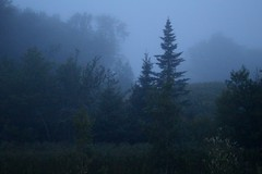 Cape Breton, Nova Scotia (elisecavicchi) Tags: morning travel canada nature nova fog forest dark dawn early stand still quiet escape gloomy adventure evergreen cape gloom melancholy scotia spruce dreamscape breton obscure clouded