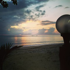 ที่นี่... เดือนเมษา โลมาสีชมพูจะมาทักทายใกล้ถึงชายหาด