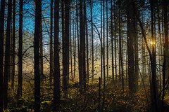Two Suns in the Forest (*Capture the Moment*) Tags: blue autumn trees sun herbst himmel 50mm14 motive blau sonne bäume wetter landschaften settingsun abendstimmung 2015 leicalenses tagesjahreszeiten farbdominanz