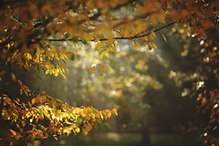 Goodbye Autumn (Tammy Schild) Tags: morning autumn trees light fall nature leaves yellow golden branch bokeh