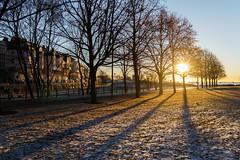 Trees (terry.k) Tags: trees sunrise shadows helsinki