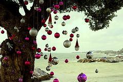 Olivo de Navidad (camus agp) Tags: olivo navidad decoracion mar costa puertobanus marbella españa puertos mubes