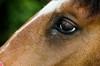 _DSC1573 (jorgejaramillo848) Tags: caballo horse