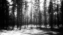 """""""Norwegian Wood ² """" (helmet13) Tags: iphone6s bw landscape forest trees coniferforest businesstrip car motionblur nature pine norway aoi heartaward peaceaward 100faves world100f"""