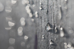Rain and Sun (Pittypomm) Tags: raindrops water drop droplet sunlight sun sparkle sparkly sparkling silver