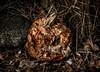 Ghost of Hallowe'en Past (Katrina Wright) Tags: dsc0115 pumpkin halloween rotten mold decay scary