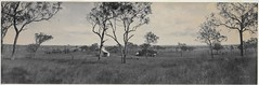 Panorama of Fitzroy Vale Station near Rockhampton, 1904 / by Melvin Vaniman (State Library of New South Wales collection) Tags: statelibraryofnewsouthwales panorama