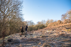 Pheasant hunting (David Claringbold) Tags: hunt hunting gun shotgun pheasant bird flying woods cold frosty shoot lightroom raw nikon d750 tamron 2470 field england kent english gear tree trees shooting winter season