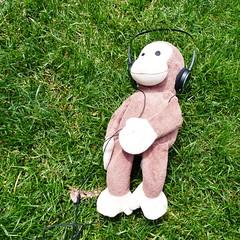Monkey with his O (Snuva) Tags: mona museumofoldandnewart hobart tasmania australia