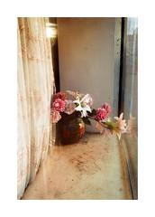 Somewhere With The Dogs (Punkroyaltiger) Tags: film analog contax contaxg2 fujifilm superia flowers
