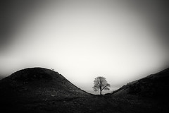Sycamore Gap, Hadrian's Wall (hezitate) Tags: sycamoregap sycamore tree hadrianswall silhouette oncebrewed cumbria northumberland haltwhistle steelrigg housesteads hills blackandwhite longexposure 10stop movement hiking walkers countrywalking landscape romanempire england scotland borders ancient wall history historic roman sycamoretree fells northumberlandnationalpark bw walking trekking tourism tourists northeast northeastengland unitedkingdom touristattraction landscapephotography canon 7d sigma1020mm mono monochrome minimal lonetree robinhood people countryside outdoors british