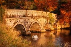 Stone Bridge and Swan (Barry O Carroll Photography) Tags: stone stonebridge bridge river rye ryewater swan maynooth kildare ireland landscape nature morning goldenhour magichour autumn fall