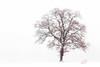 Winterbaum (Jan Čmárik) Tags: 6d cmarik canon eos cmrk tree baum weiss white snow nature red snowing winter cold landscape minimal germany bw alb winterland outdoor minimalistic
