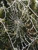 Icy cobweb