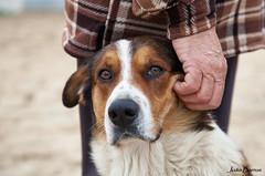 Protected... (JOAO DE BARROS) Tags: joão barros dog portrait animal
