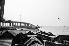 @Pamban,Rameswaram. (vjisin) Tags: rameswaram pamban bridge train bird indianstreetphotography streetphotography india asia tamilnadu incredibleindia outdoor faith blackandwhite monochrome