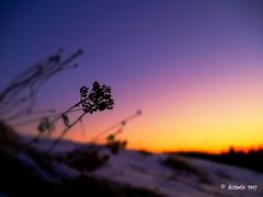 frost (skistar64) Tags: jänner january winter wintertime kälte cold frost morning morgen daham drausen outside outdoor pisweg kärnten carinthia