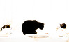 3 cats 1 in the middle (PDKImages) Tags: cat black ragdoll monochrome pet animal feline blackcat asleep eyes calming